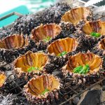 Đi về Cô Tô ăn đặc sản biển Cầu Gai quý hiếm